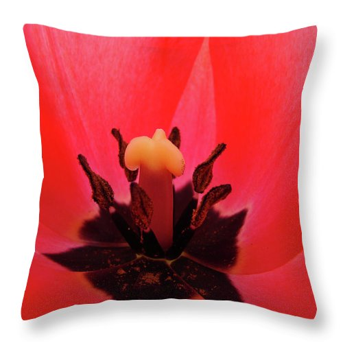 Tulip Throw Pillow featuring the photograph Red Tulip Art Print Inside Tulips Flowers Baslee Troutman by Baslee Troutman