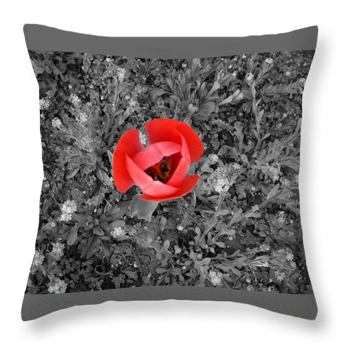 Red Tulip Photography Throw Pillow featuring the photograph Red Tulip From Above by Georgeta Blanaru