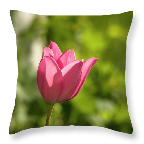 Tulip In The Garden Throw Pillow featuring the photograph Red Tulip Head by Cliff Norton