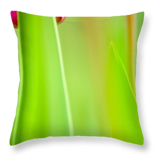 Flower Throw Pillow featuring the photograph Red Tulip by Silke Magino