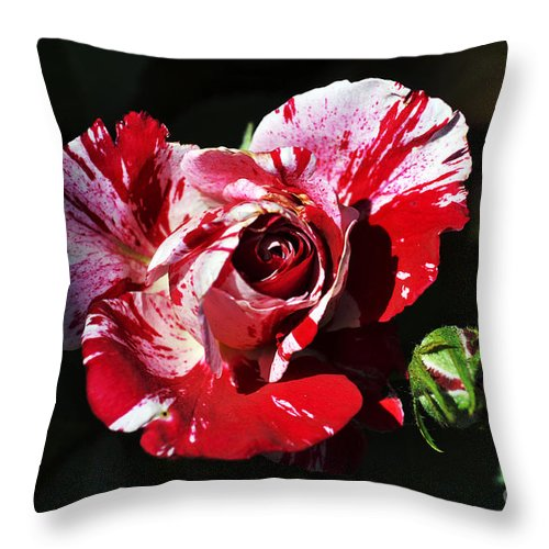 Clay Throw Pillow featuring the photograph Red Verigated Rose by Clayton Bruster