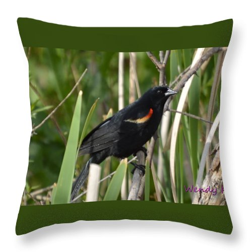 Red Throw Pillow featuring the photograph Red-winged Blackbird by Wendy Fox