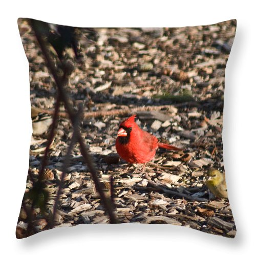 Redbird Throw Pillow featuring the photograph Redbird And American Golden Finch by Douglas Barnett