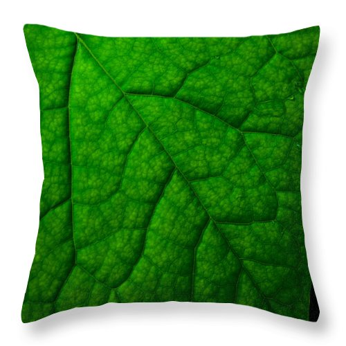 Nature Throw Pillow featuring the photograph Redbud Leaf by Jeff Phillippi