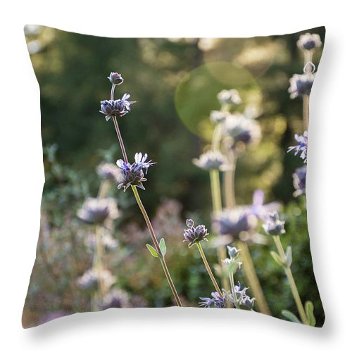 Lavender Throw Pillow featuring the photograph Redwood Meadow Light 2 by Jessica Ruscello