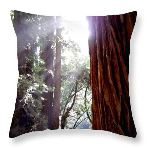 Redwoods Throw Pillow featuring the photograph Redwood Sunlight by Mary Rogers
