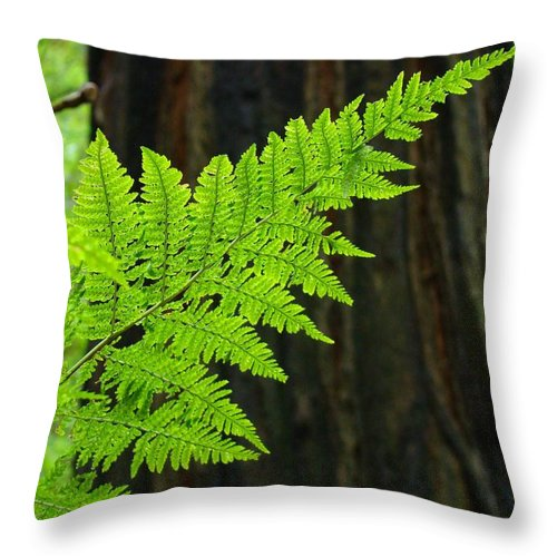 Fern Throw Pillow featuring the photograph Redwood Tree Forest Ferns Art Prints Giclee Baslee Troutman by Baslee Troutman