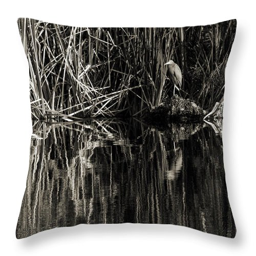 Little Blue Heron Throw Pillow featuring the photograph Reeds And Heron by Steven Sparks