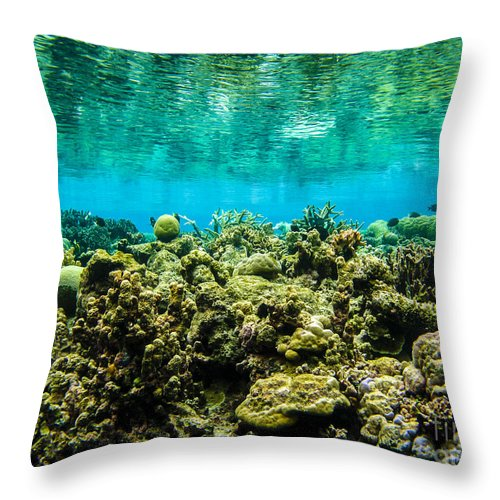 Coral Throw Pillow featuring the photograph Reef At Ahnd Atoll by Dan Norton