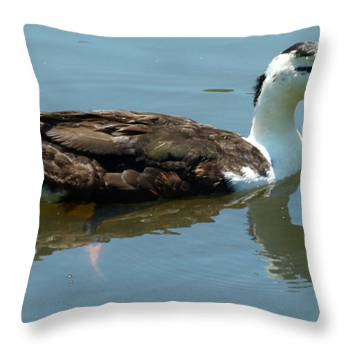 Duck Throw Pillow featuring the photograph Reflecting Duck by Richard Bryce and Family