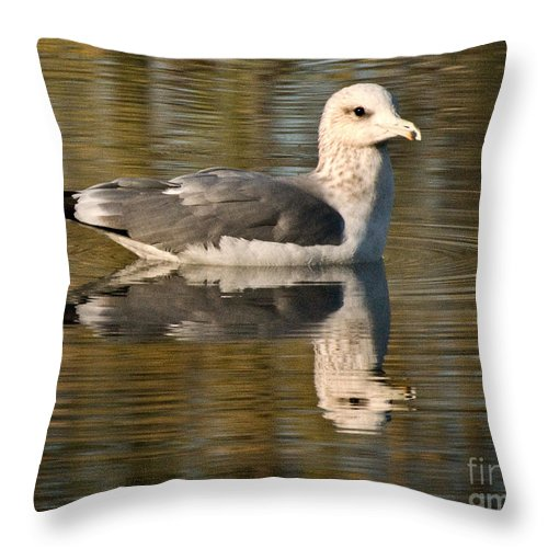 California Scenes Throw Pillow featuring the photograph Young Gull Reflections by Norman Andrus