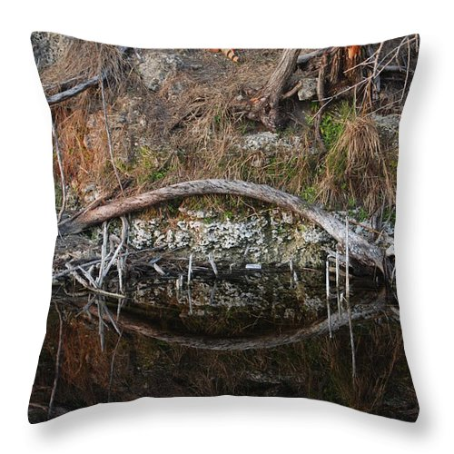 Iguana Throw Pillow featuring the photograph Reflections Iguana by Rob Hans