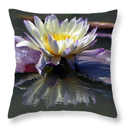 Water Lily Throw Pillow featuring the photograph Reflections Of Beauty by John Lautermilch