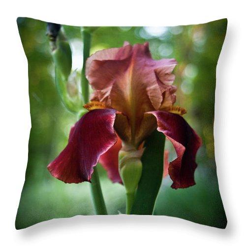 Regal Throw Pillow featuring the photograph Regal Iris by Douglas Barnett