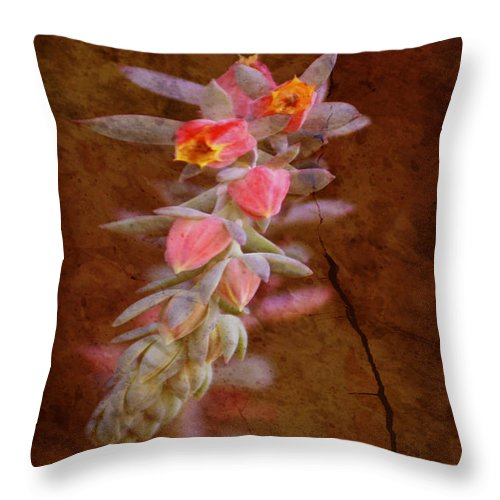 Flowers Throw Pillow featuring the photograph Regrowth by Holly Kempe