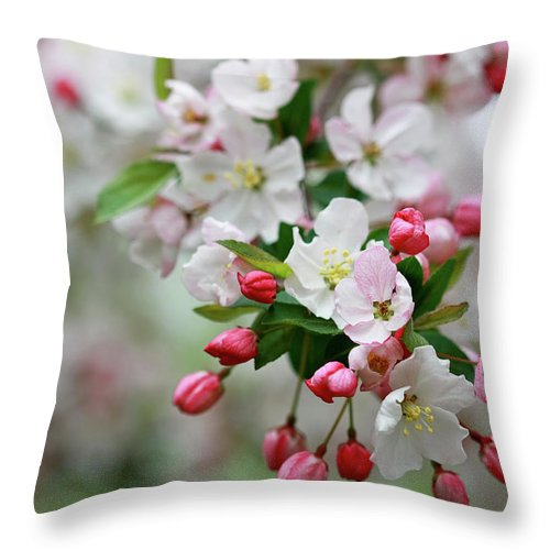 Crab Apple Blossoms Throw Pillow featuring the photograph Renewal by Martina Schneeberg-Chrisien