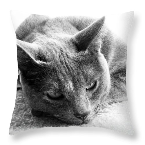 Cats Throw Pillow featuring the photograph Resting by Amanda Barcon