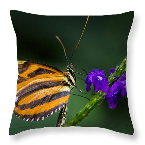 Acrylic Print Throw Pillow featuring the photograph Resting Beauty by Garvin Hunter