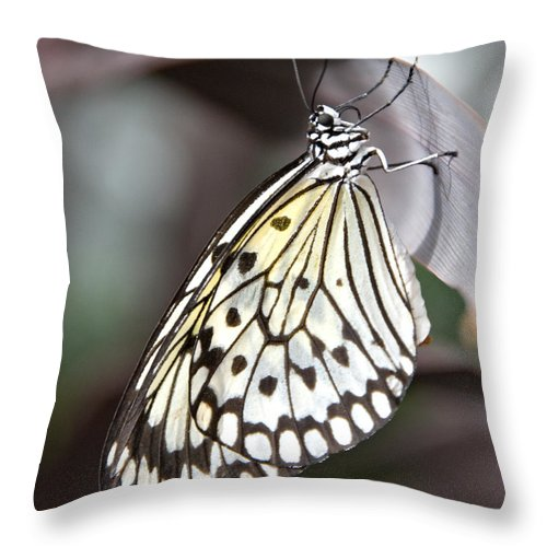 Butterfly Throw Pillow featuring the photograph Resting by Jacqueline Milner