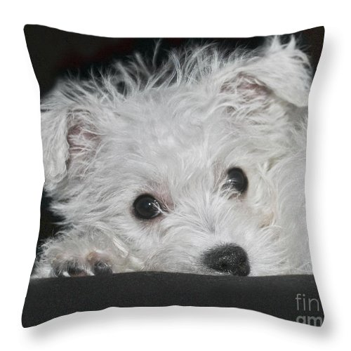 White Throw Pillow featuring the photograph Resting Puppy by Terri Waters