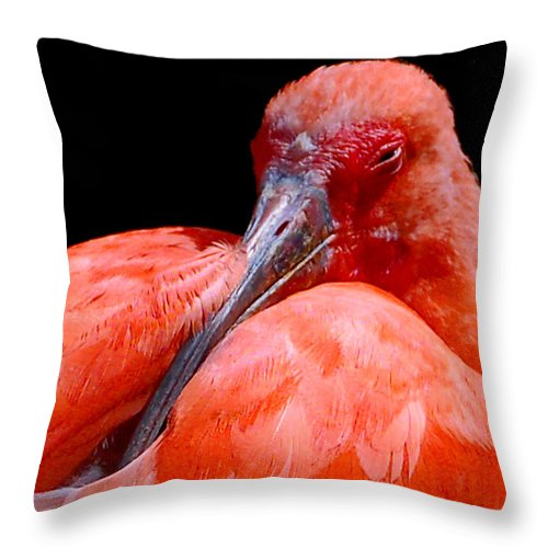 Bird Throw Pillow featuring the photograph Resting Scarlet Ibis by Donna Proctor