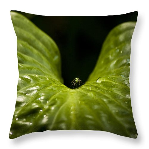 Rest Throw Pillow featuring the photograph Resting Spot by Teresa Mucha