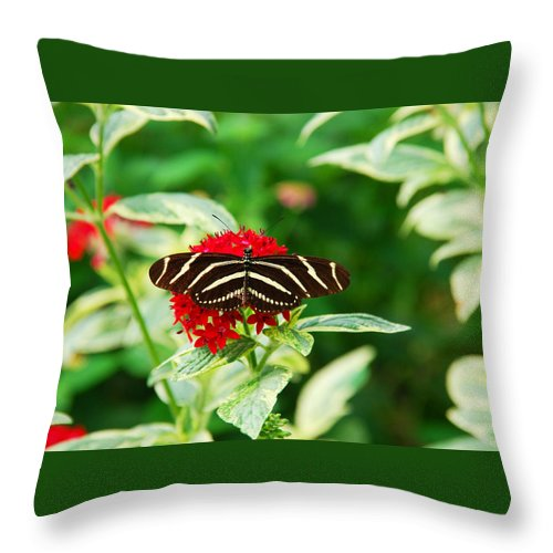 Butterfly Throw Pillow featuring the photograph Resting by Susanne Van Hulst