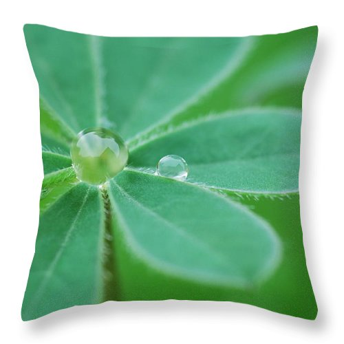 Plant Throw Pillow featuring the photograph Retaining Water by Donna Blackhall
