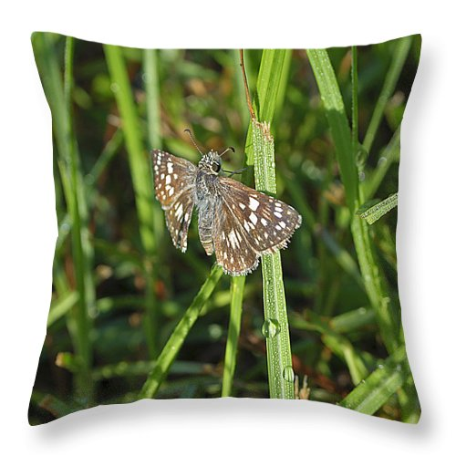 Butterfly Throw Pillow featuring the photograph Reversed Roadside Skipper by Kenneth Albin