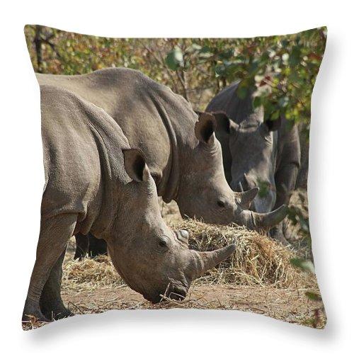 Rhino Throw Pillow featuring the photograph Rhinos, Zambia by Jennifer Wheatley Wolf
