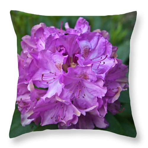 Rhododendron Throw Pillow featuring the photograph Rhododendron Elegance by Douglas Barnett