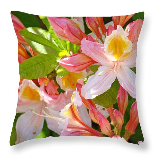 Rhodies Throw Pillow featuring the photograph Rhododendrons Garden Floral Art Print Pink Rhodies by Baslee Troutman