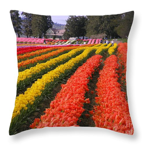 Tulips Throw Pillow featuring the photograph Ribbons Of Color by Louise Magno