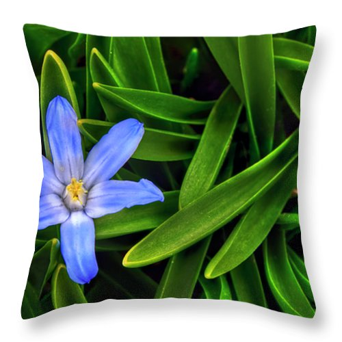 Backyard Throw Pillow featuring the photograph Ribbons Of Spring by Evelina Kremsdorf