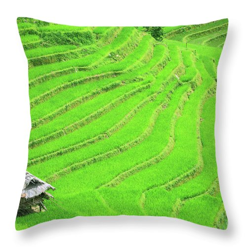 Terraces Throw Pillow featuring the photograph Rice Field Terraces by MotHaiBaPhoto Prints