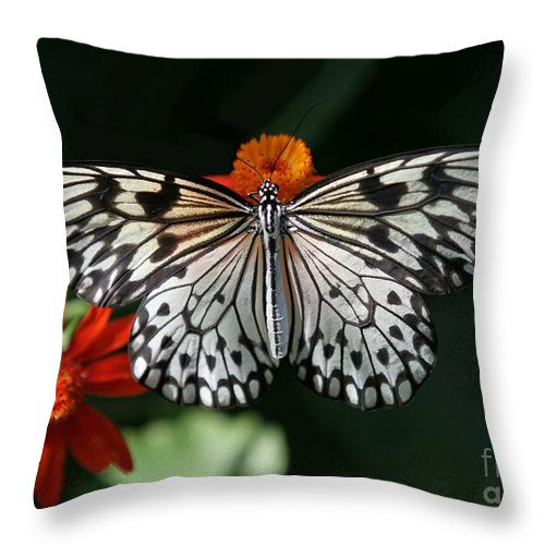 Butterfly Throw Pillow featuring the photograph Rice Paper Butterfly by Sabrina L Ryan