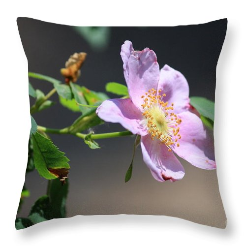 Floral Throw Pillow featuring the photograph Rimrock Rose by Carol Groenen
