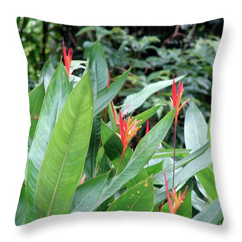 Rio De Janeiro Throw Pillow featuring the photograph Rio De Janeiro Flowers by Brett Winn