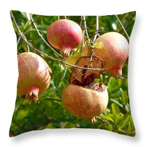 Ripe Throw Pillow featuring the photograph Ripe Pomegranates by Valerie Ornstein