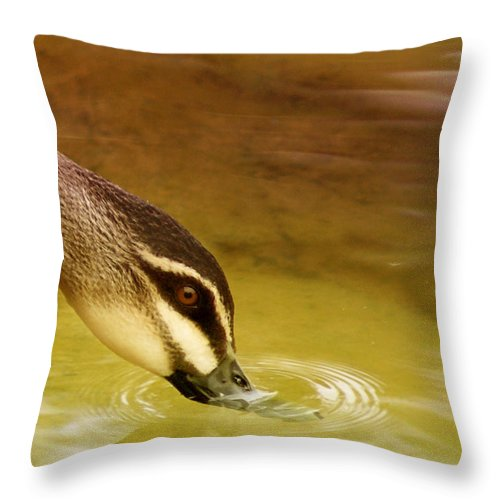Animals Throw Pillow featuring the photograph Ripples by Holly Kempe