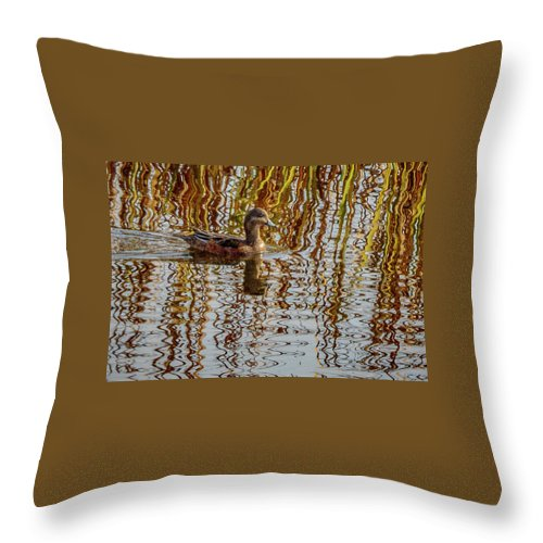 Wildlife Throw Pillow featuring the photograph Rippling Patterns by Albert Seger