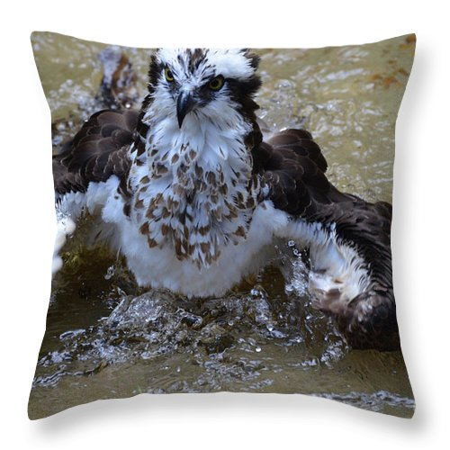 Bathing Throw Pillow featuring the photograph River Hawk Splashing Around In The Water by DejaVu Designs