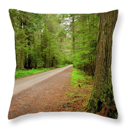 Big Sky Country Throw Pillow featuring the photograph Road Through The Cedars by Idaho Scenic Images Linda Lantzy
