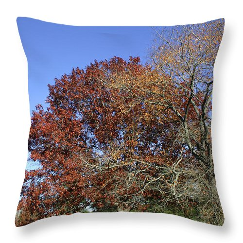 Tree Throw Pillow featuring the photograph Roadside Attraction by Nina Fosdick