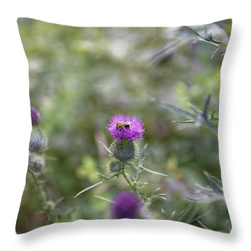 Autumn Throw Pillow featuring the photograph Roadside Thistle Bee Polination by Adrian Bud