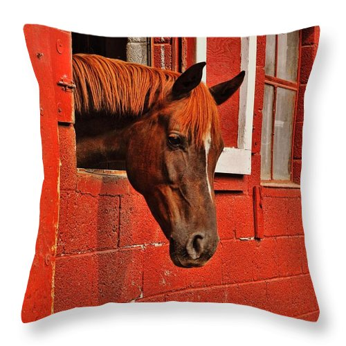 Horse Throw Pillow featuring the photograph Roan Red by JAMART Photography