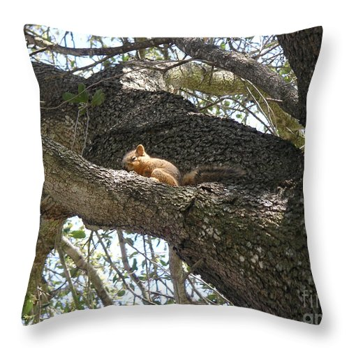 Nature Throw Pillow featuring the photograph Rock-a-bye Baby... by Lucyna A M Green