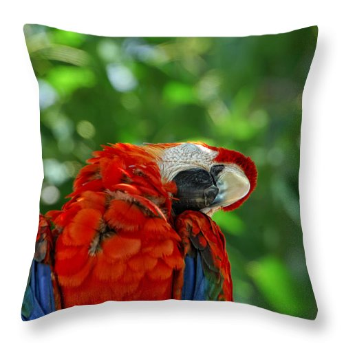 Parrot Throw Pillow featuring the photograph Rock A Bye Birdie by Donna Blackhall