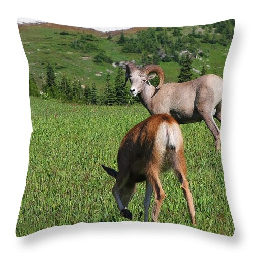 Bighorn Sheep Throw Pillow featuring the photograph Rocky Mountain Bighorn Sheep Ram And Mule Deer Doe Glacier National Park Mt by Christine Till