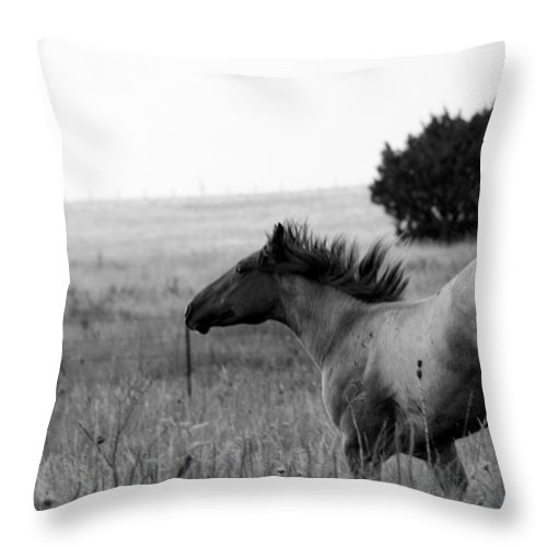 Horse Throw Pillow featuring the photograph Rogue by Elizabeth Hart